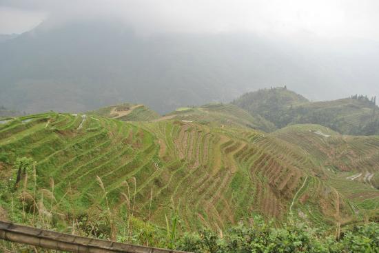 Yuanyang Rice Terraces: Rizières en terrasses sous la pluie
