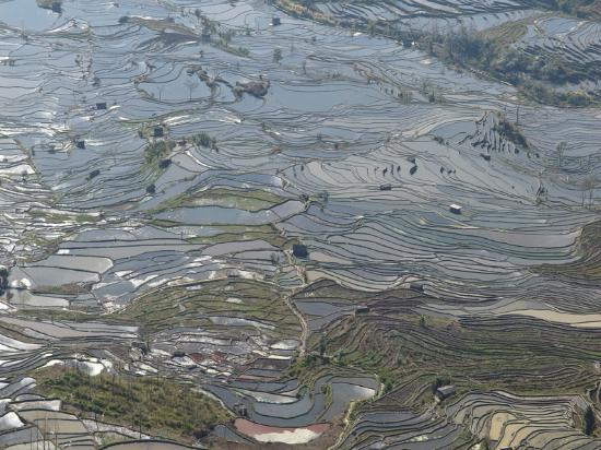 Yuanyang County, จีน: YuanYang rice terrace