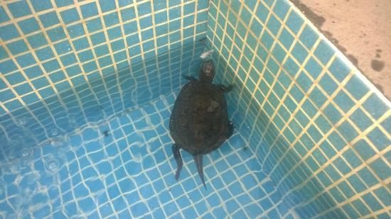 Hotel Maison Tresnuraghes : tartaruga in vasca