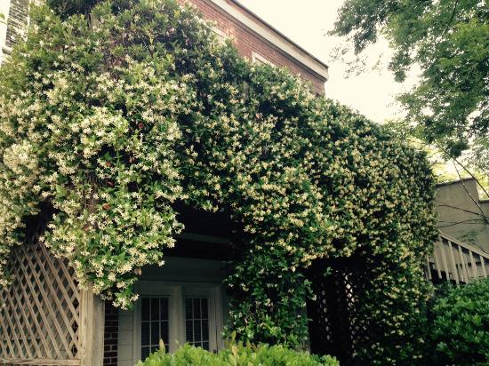 Carriage House Inn: The Jasmine is in bloom