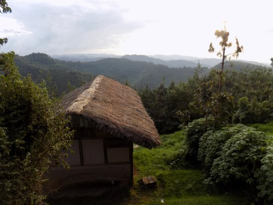 Gorilla Mist Camp : View of the camp