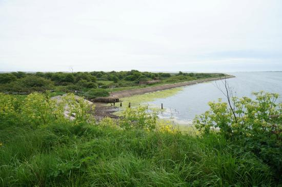 ‪Farlington Marshes Wildlife Reserve‬