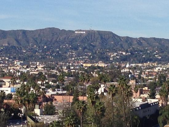 The Line : Daytime view from Hollywood Hills roomm- you can actually see the Hollywood sign!