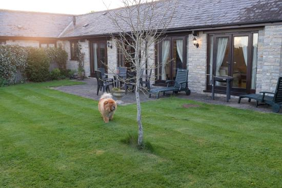 Cary Fitzpaine House: Fully enclosed garden, perfect for the dogs