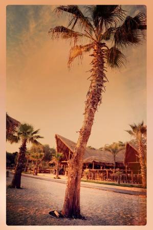 Bolivar Beach Bar