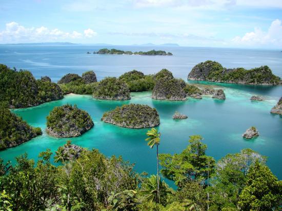 Raja ampat picture of papua paradise eco resort raja ampat tripadvisor - Raja ampat dive resort reviews ...