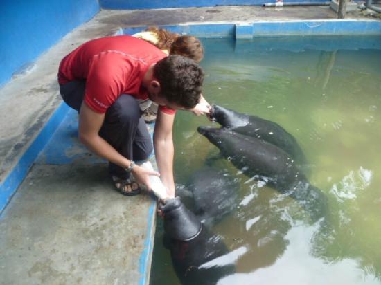 Amazon Rescue Center : centro rescate de manaties Iquitos