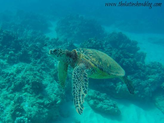 Kahe Point Beach Park: Snorkeling with turtles freely at Electric Beach