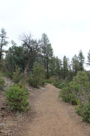 """The Highlands Center for Natural History: """"Stretch Pebble"""" Accessible Trail"""