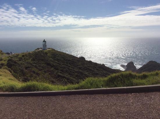 Cape Reinga Adventures Day Tours : Postcard perfect