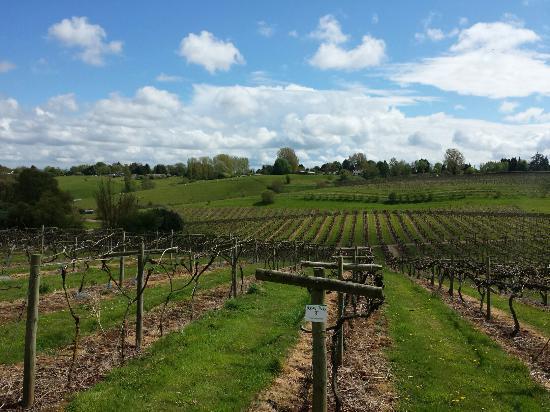 Three Choirs Vineyards: May 2015