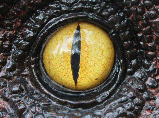 Dinosaur Eye! - Picture of Tropical Butterfly House ...
