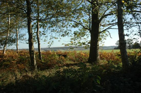 King's Wood