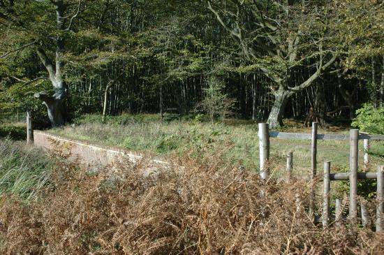 King's Wood - deer trap
