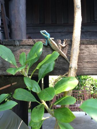 Little Village Chiang Mai: Un visiteur ;)