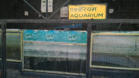 Udaipur Zoo: No Fish