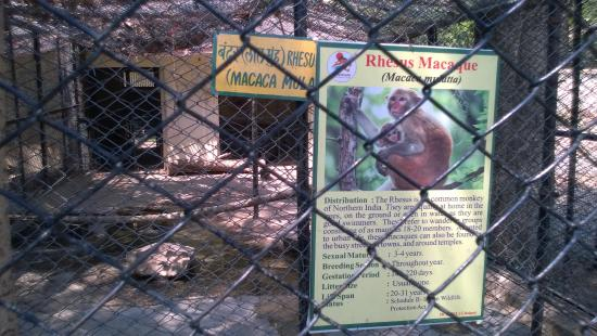 Udaipur Zoo: Poster