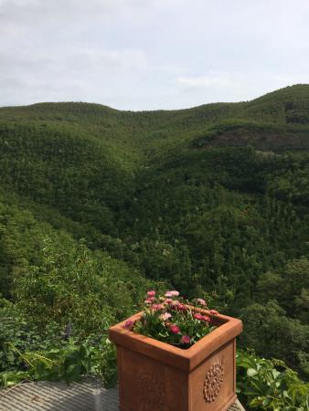 Novole : La vista dei boschi