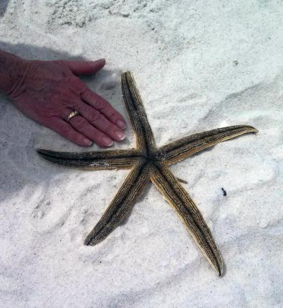 Noble Manor Bed and Breakfast: starfish and hand