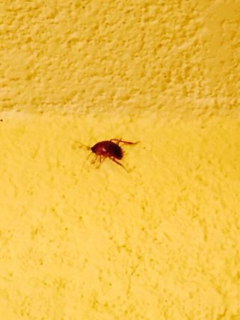 Caye Casa: One of many bugs in bedroom and bathroom