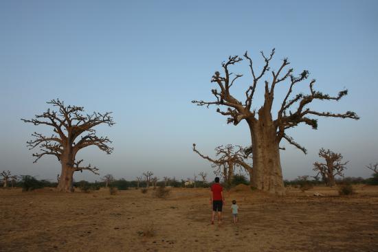 baobab soleil b b thies s n gal voir les tarifs 9 avis et 14 photos. Black Bedroom Furniture Sets. Home Design Ideas