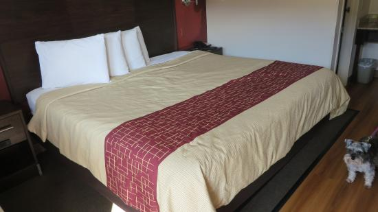 King Sized Bed Picture Of Red Roof Inn Champaign