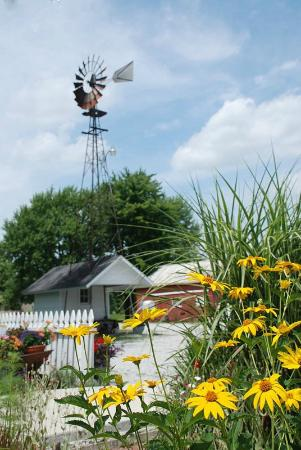 Olde Buffalo Inn B&B : Charming outbuildings and Windmill