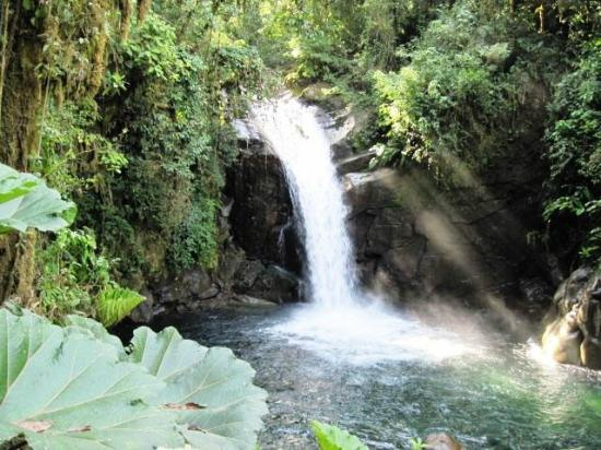Talamanca Reserve: Hidden Waerfall