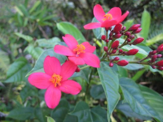 Talamanca Reserve: Gardens