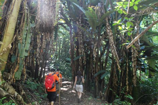 Talamanca Reserve: Hiking Trails