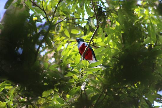Talamanca Reserve: Quetzal