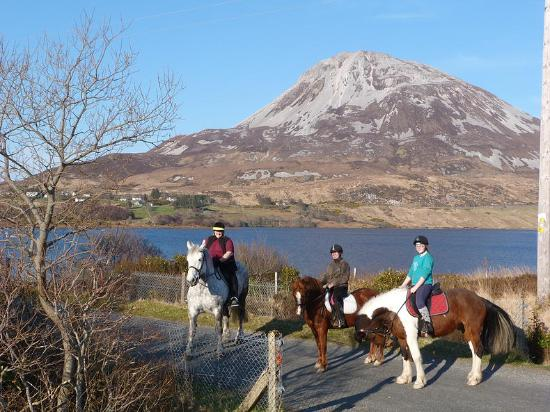 Wild Atlantic Equestrian Centre