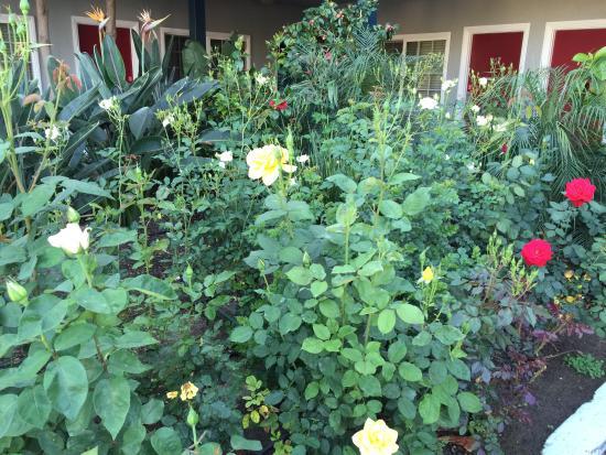 Rose Garden Inn : Beautiful flowers