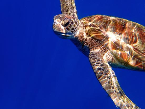 Ocean Sound Dive & Yoga