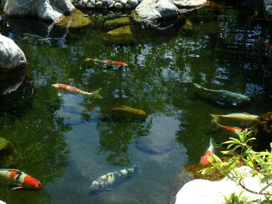 Overview of the garden picture of japanese friendship for Japanese friendship garden san jose koi fish