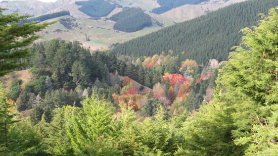 Eastwoodhill Arboretum : Stunning view from top Lookout