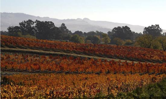Kelley & Young Wine Garden Inn: Sonoma Wine Country!