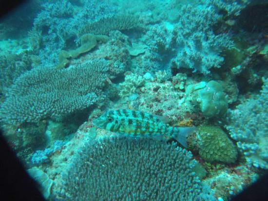 Jardin de corail de banc priv picture of blue vision for Aquatic sport center jardin balbuena