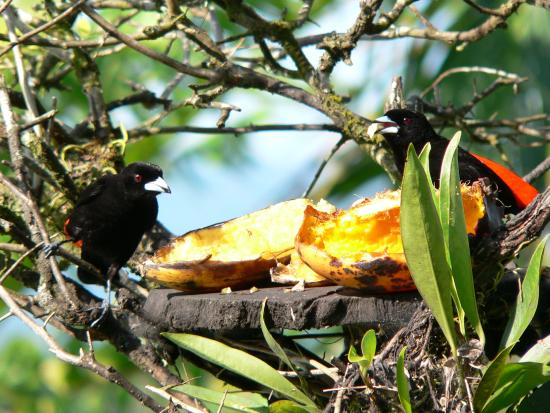 Rio Claro, Costa Rica : Garten