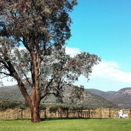 Mount Broke Wines & Restaurant: photo0.jpg