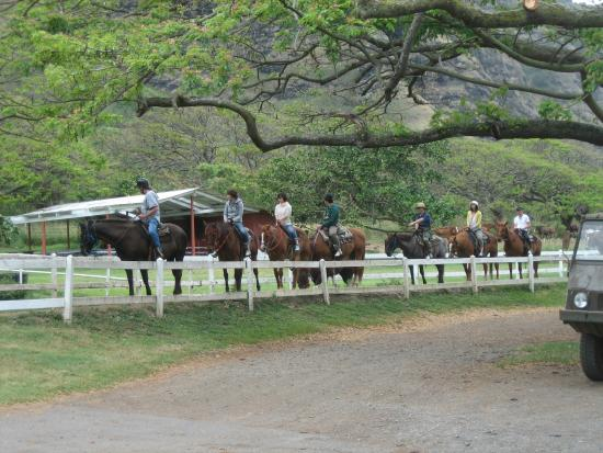 Horseback riding tours picture of kualoa ranch for Db ranch