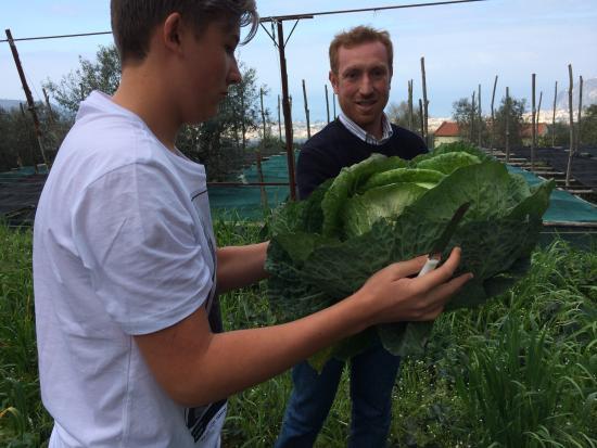 Farm Experience- Agriturismo Antico Casale - Colli di San Pietro