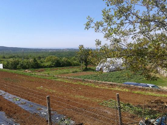 Azienda Agricola - Kmetija MILIC