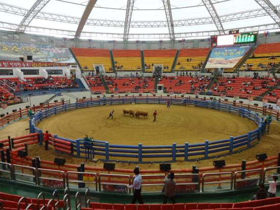 Cheongdo Bullfighting Arena
