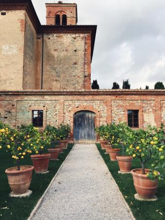 Agriturismo Sant'Anna in Camprena: photo5.jpg