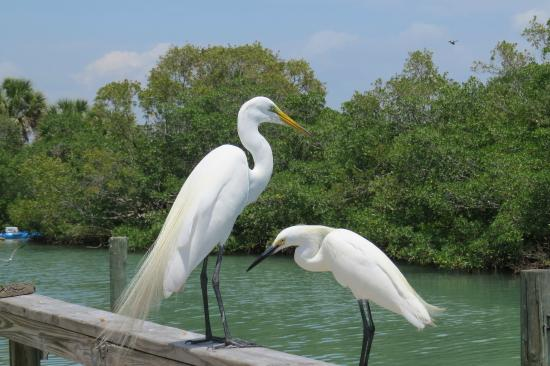Suntan Terrace : we made friends with the birds on the dock by sharing our shrimp with them.