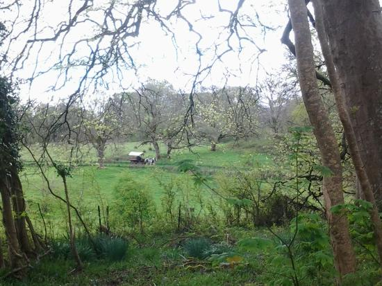 Muckross Abbey : The walk to the Abbey