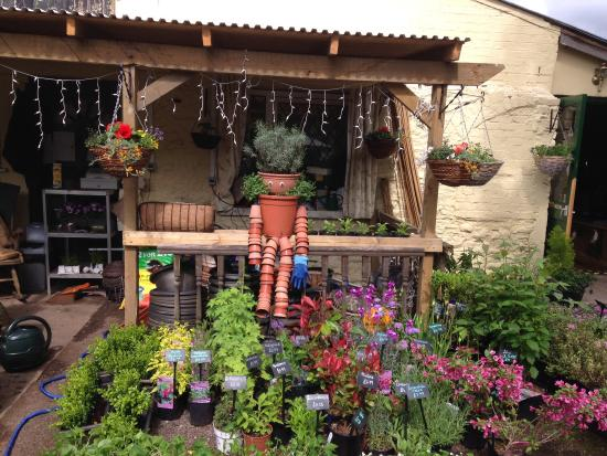 Potting shed monmouth picture of the potting shed for Garden shed tripadvisor