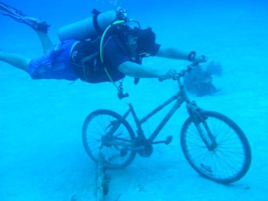 Happy Fish Divers : Dom de Tour
