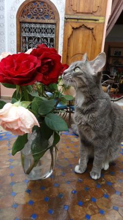 """Riad Attarine: Le chat """"Trésor"""" dans son Riad"""
